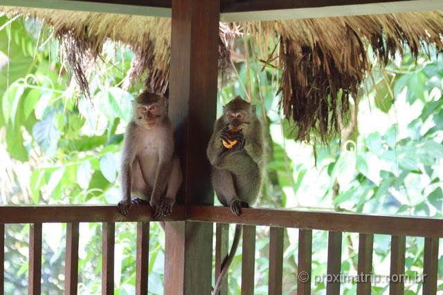 macacos estão em toda parte em Bali: inclusive nos hotéis!