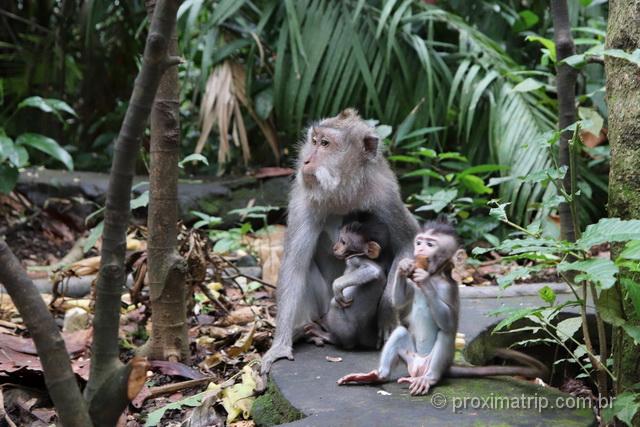 Macacos na Floresta Santuário de Ubud, em Bali