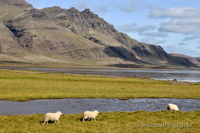 Ovelhas: elas e os cavalos são vistos constantemente perto das estradas!