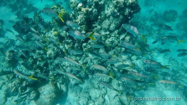 O que fazer em Turks and Caicos: explorar a vida marinha nos corais bem preservados!