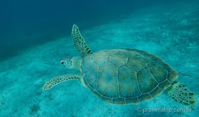 Snorkeling em Turks and Caicos: Smith's Reef é um lugar recomendado para a atividade em Providenciales