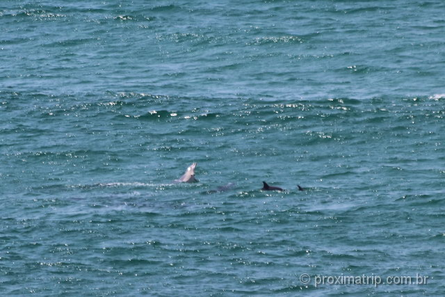 golfinhos em Byron Bay