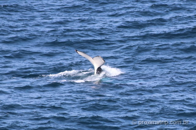 Baleias em Gold Coast